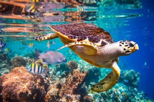 Sea life in Maldives