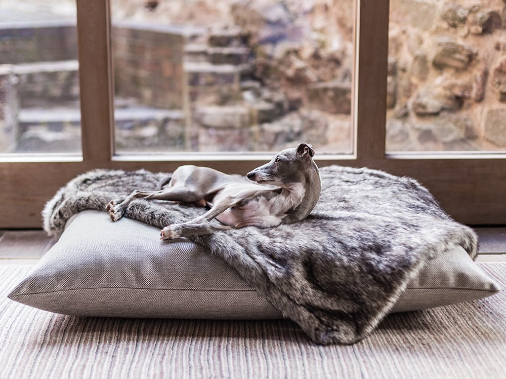 5 Ways You Can Give Your Dog a Luxury Lifestyle